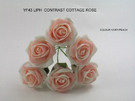 YF43LIPH -Quality  6 Contrast Cottage Rose in Ivory and Peach Colourfast foam by Bridalcraft